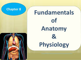 Learning Anatomy And Physiology Free Online Chapter 8 Fundamentals Of Anatomy And Physiology