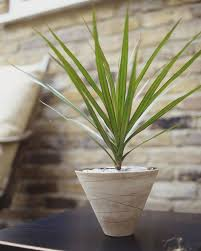 Indoor House Plants Low Light 17 Best Houseplants For Low Light Images On Pinterest Plants