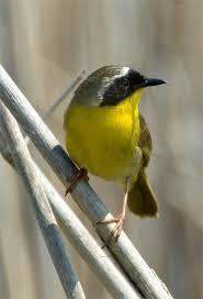 Utah birds images 24 best alpine utah birds images utah birds and jpg