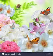 with roses and butterflies stock photo royalty free image