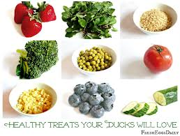 what to feed backyard chickens healthy treats for backyard ducks fresh eggs daily