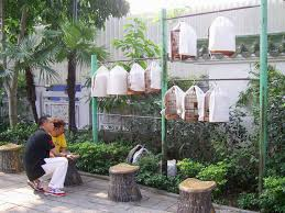 file hk yuenpostreetbirdgarden birdwatch jpg wikimedia commons