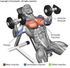 Bench Exercises With Dumbbells Chest Dumbbell Inclined Bench Press Lower Abs Pinterest