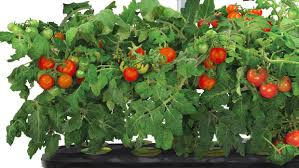 great christmas gifts for gardeners available online grand forks