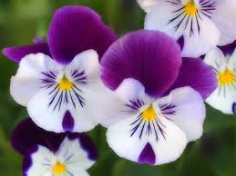 18 best different types of flowers images on pinterest nature