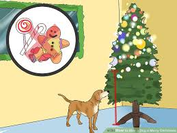 Are All Dogs Colour Blind 3 Ways To Give A Dog A Merry Christmas Wikihow