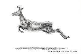 how to draw a deer elk reindeer moose youtube