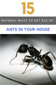 15 best ways to get rid of ants in house naturally