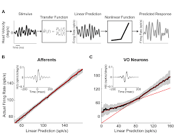 the vestibular system implements a linear u2013nonlinear transformation