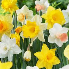 flowering flower bulbs garden plants u0026 flowers the home depot
