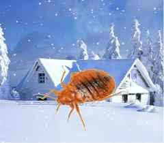Why Do Bed Bugs Come Out At Night The Quick Guide On How Bed Bugs Survive And How You Can Survive