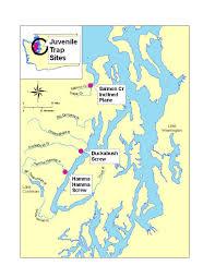 Map Of Lake Washington by Abundance And Survival Of Puget Sound Salmonids Hood Canal