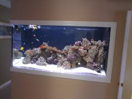 Wall Aquarium by Our 400 Gallon In Wall Natural Sun Lit Reef Reef2reef Saltwater