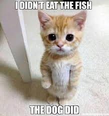Funny Fish Memes - funny fish memes page 7 poppa ryno s aquatics aquarium forums