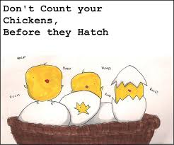 Never Count Your Chicken Before They Hatch Don T Count Your Chickens Before They Hatch Virilityunemployed
