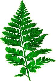 Free Picture Leaf Nature Fern Fern Leaf Nature Free Image On Pixabay