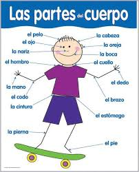 270 best spanish health unit images on pinterest spanish