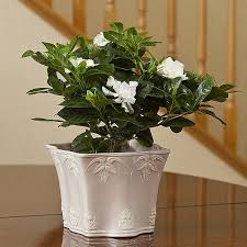 Bathroom Flowers And Plants 5 Best Plants For Green Bathroom Quiet Corner