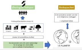 om ressourcer økologisk fodspor og bæredygtighed på frederiksberg