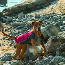 boxer dog t shirts uk the 10 best winter coats to keep your dog warm this winter