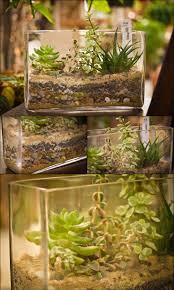 best 25 cactus terrarium ideas only on pinterest terrarium diy