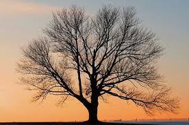 joisey showa fotos my tree