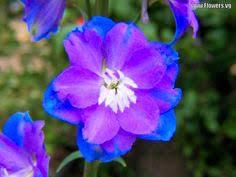Purple And Blue Flowers Purple And Blue Flowers Flower Inspiration