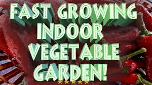 aerogarden bounty indoor growing herb garden aerogarden youtube