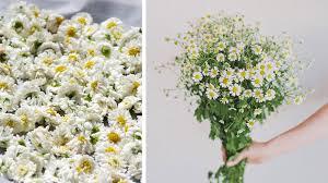 fleurs mariage quelles fleurs pour un mariage en été