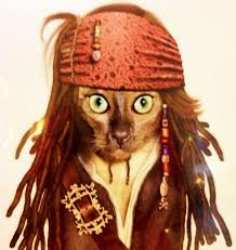 Halloween Jack Sparrow Costume 231 Costumes Images Animals Costume Ideas