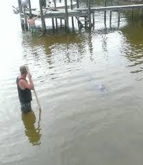 Florida Shark Attack Map Dolphin Dies From Shark Bites Near Destin Florida Tracking Sharks