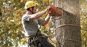 tree removal palm harbor fl tree removal service near me tree