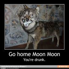 Crazy Wolf Meme - fancy manipulative dog plays his owner like a fiddle testing