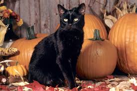 halloween pet background psa be kind to black cats this halloween mr and mrs halloween