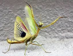 praying mantis wings and our secret weapons wings a journey in faith
