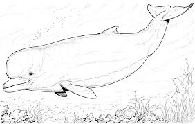 free dolphin coloring pages gianfreda net