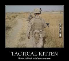 Funny Kitten Meme - typical kitten funny meme bajiroo com