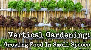 How To Plant Vertical Garden - vertical gardening growing food in small spaces survivopedia