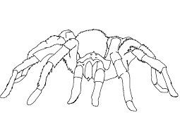 awesome spider coloring pages 70 on gallery coloring ideas with