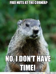 Gopher Meme - groundhog pictures free free nuts at the corner no time