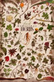 herb chart herb chart herbal teas culinary herb charts lots of styles