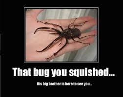 Funny Scary Memes - animal memes that bug you squished funny memes