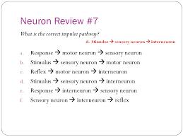 What Is Interneuron Quiz 1 Neuron Review Questions Ppt Video Online Download