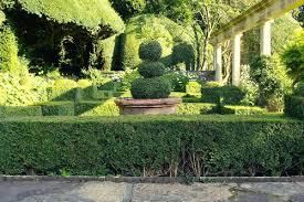 English Box Topiary - box hedge plants and borders