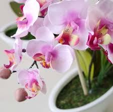 wedding decorations wholesale orchid wholesale picture more detailed picture about wedding
