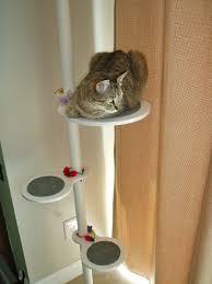 the glam cat