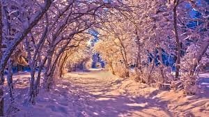 snowy tree tunnel on path through park wallpaper nature
