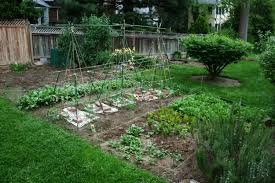 how to start a winter vegetable garden garden trends