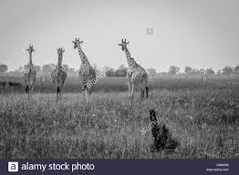 walking away black and white stock photos u0026 images alamy
