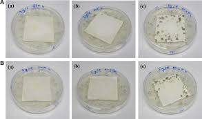 b b mycose si ge antimicrobial activity of agcl embedded in a silica matrix on cotton